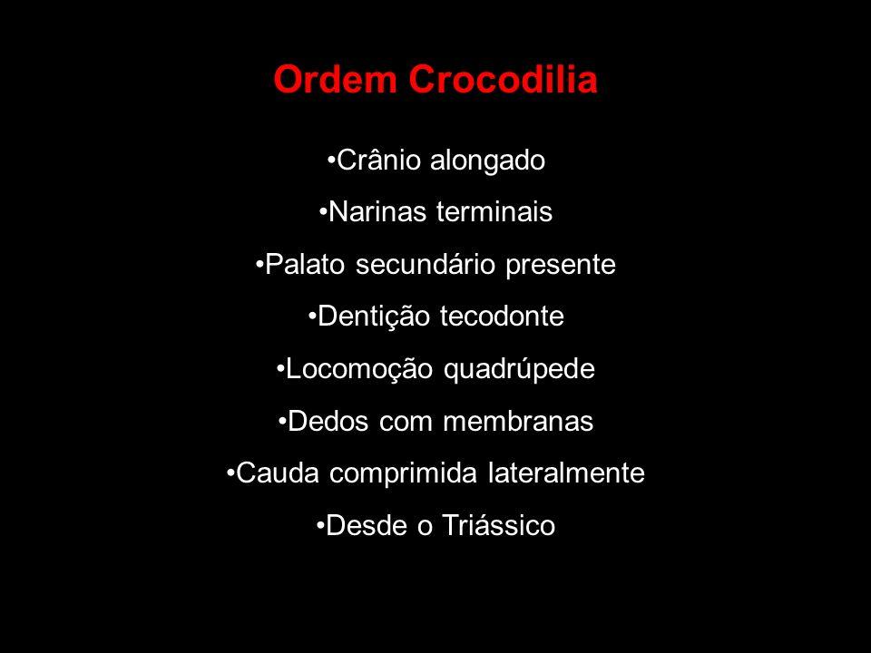 Ordem Crocodilia Crânio alongado Narinas terminais