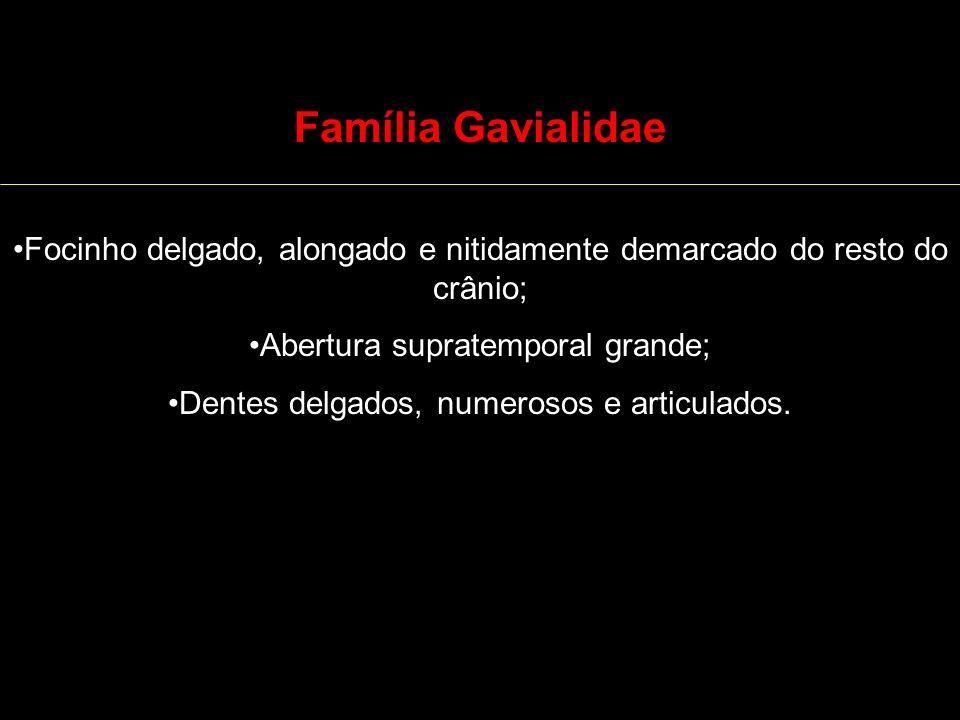 Família GavialidaeFocinho delgado, alongado e nitidamente demarcado do resto do crânio; Abertura supratemporal grande;