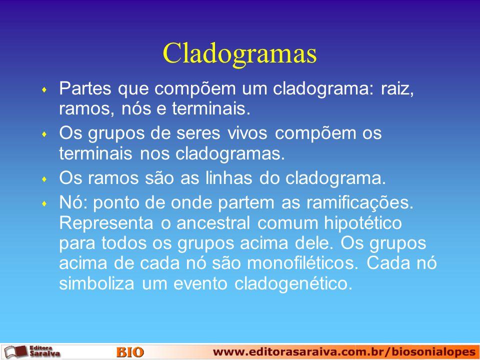 Cladogramas Partes que compõem um cladograma: raiz, ramos, nós e terminais. Os grupos de seres vivos compõem os terminais nos cladogramas.