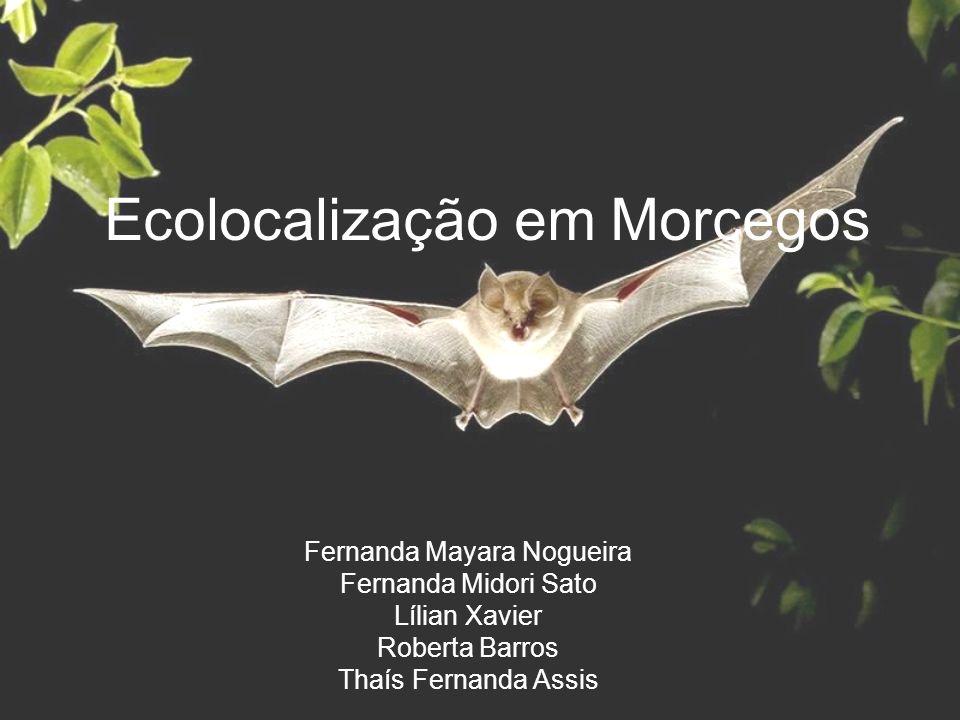 Ecolocalização em Morcegos