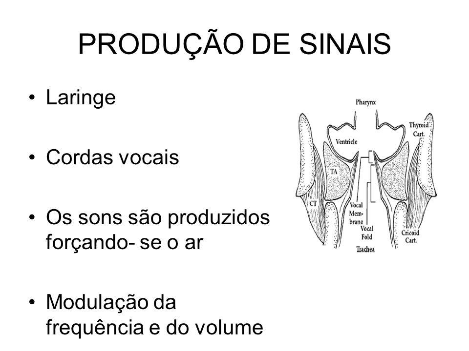 PRODUÇÃO DE SINAIS Laringe Cordas vocais