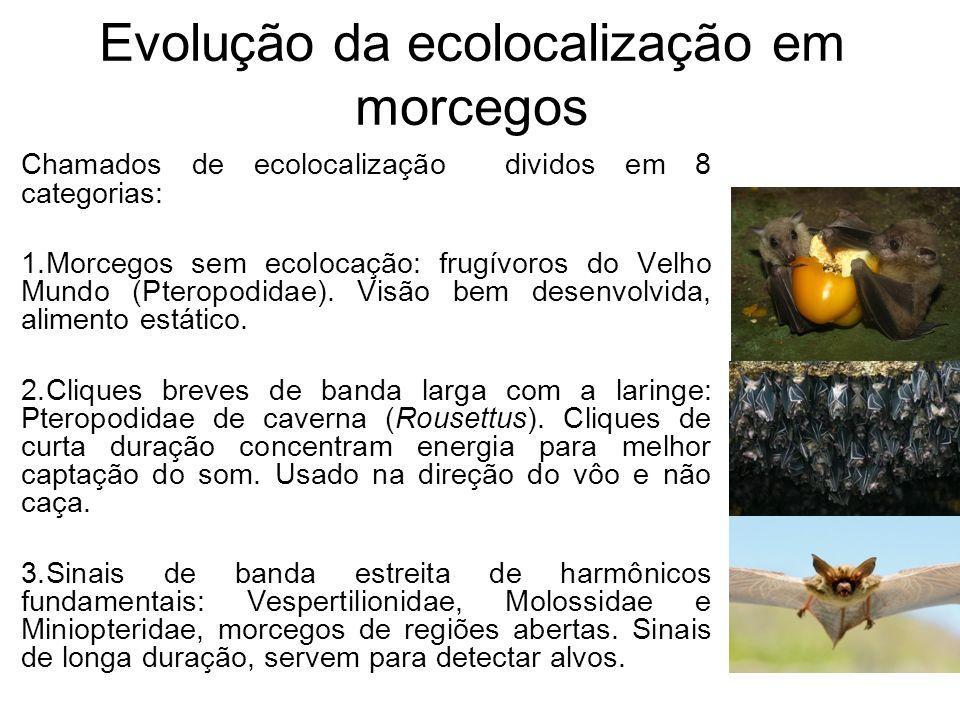 Evolução da ecolocalização em morcegos