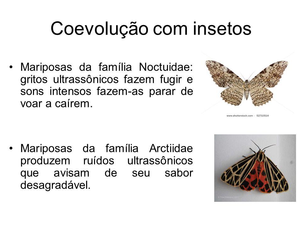Coevolução com insetos