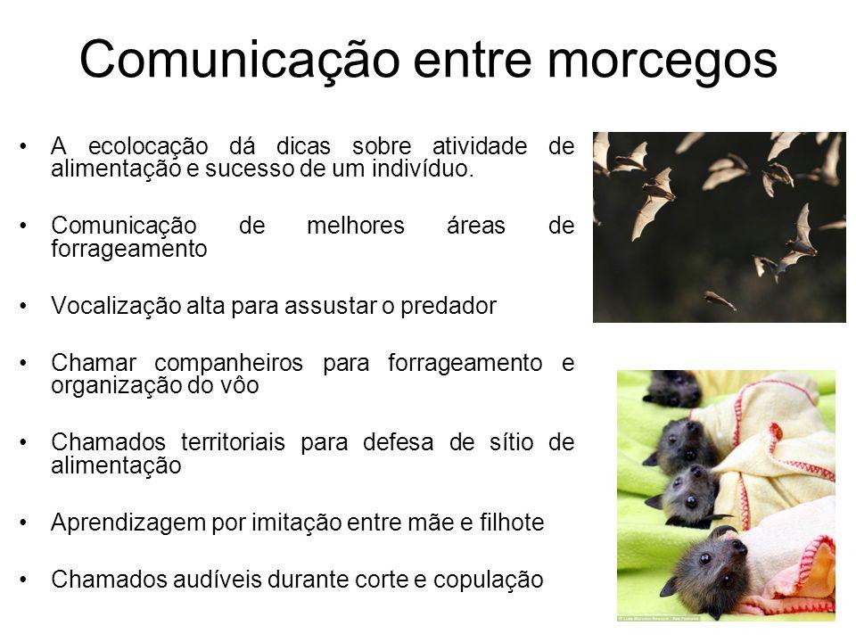 Comunicação entre morcegos