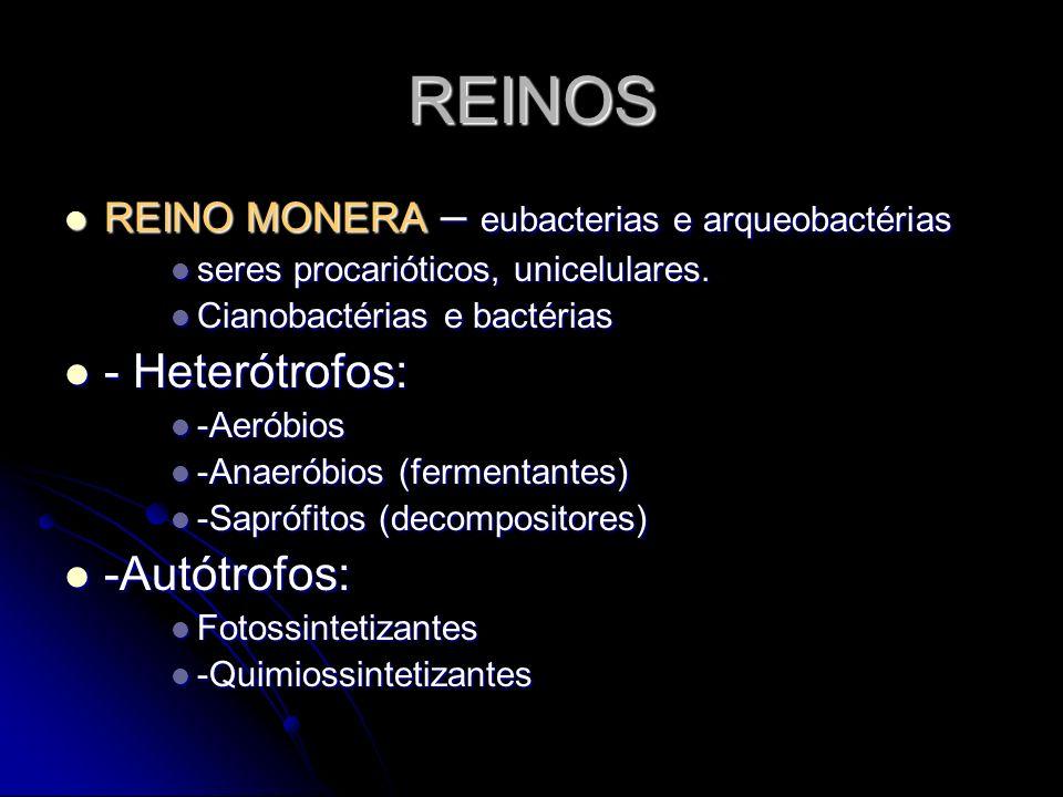 REINOS - Heterótrofos: -Autótrofos:
