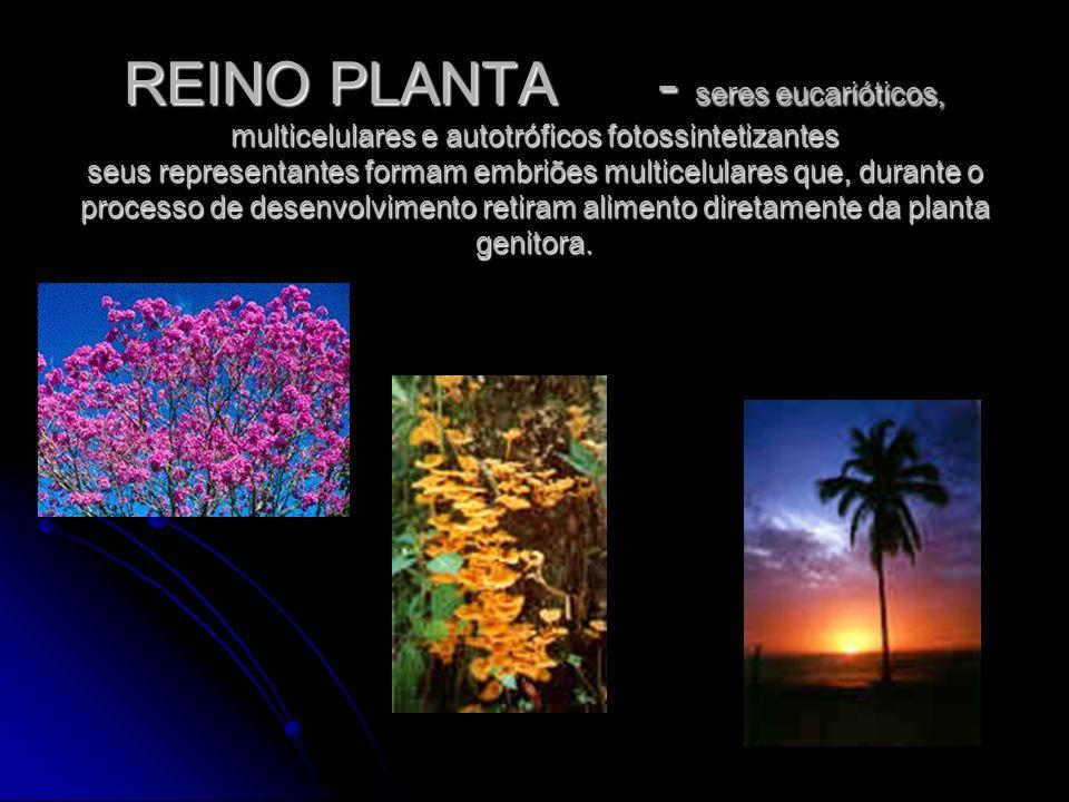 REINO PLANTA - seres eucarióticos, multicelulares e autotróficos fotossintetizantes seus representantes formam embriões multicelulares que, durante o processo de desenvolvimento retiram alimento diretamente da planta genitora.