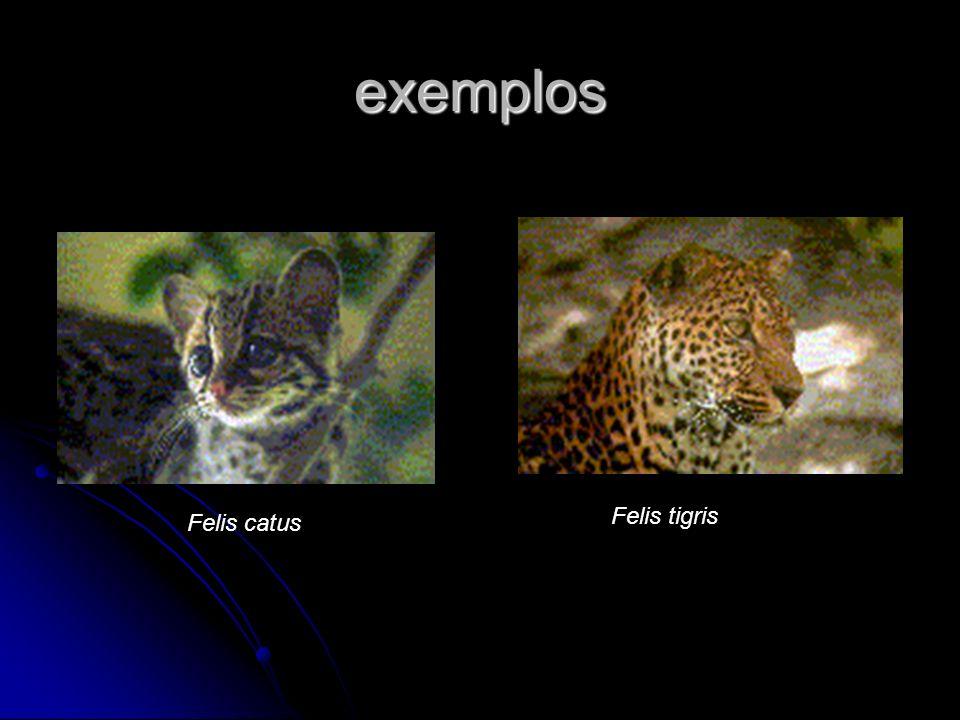exemplos Felis tigris Felis catus