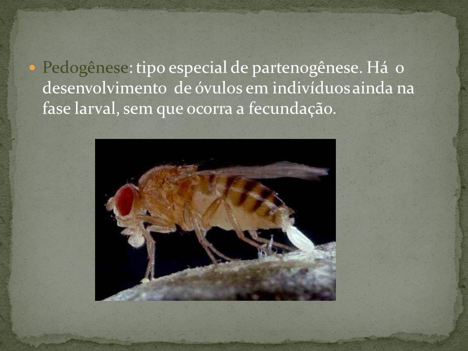 Pedogênese: tipo especial de partenogênese
