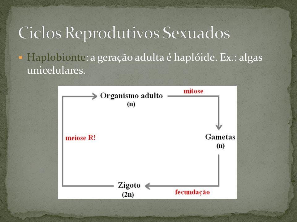 Ciclos Reprodutivos Sexuados