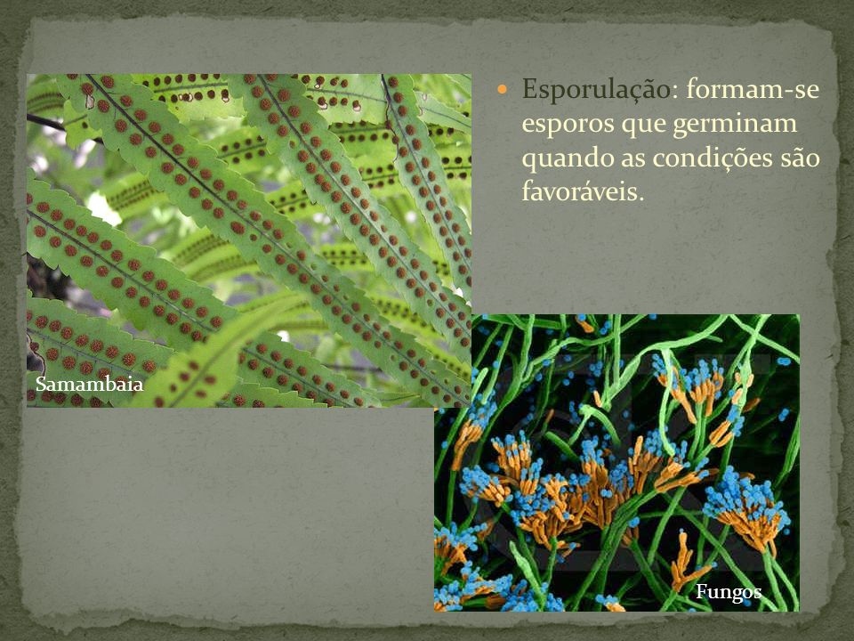 Esporulação: formam-se esporos que germinam quando as condições são favoráveis.