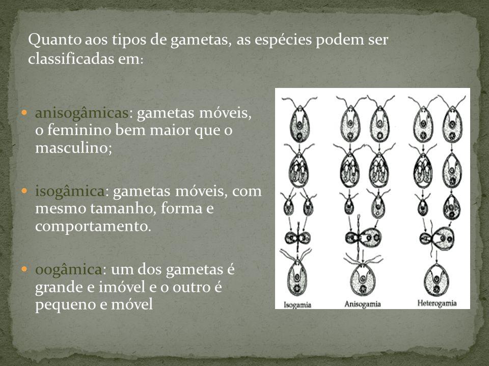 Quanto aos tipos de gametas, as espécies podem ser classificadas em: