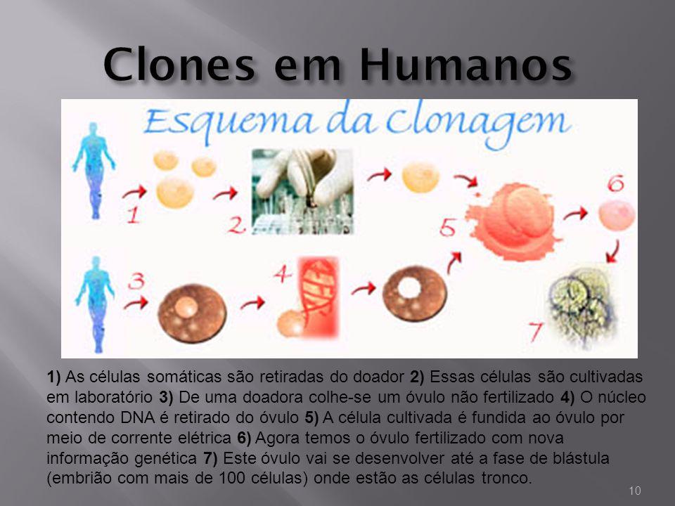 Clones em Humanos