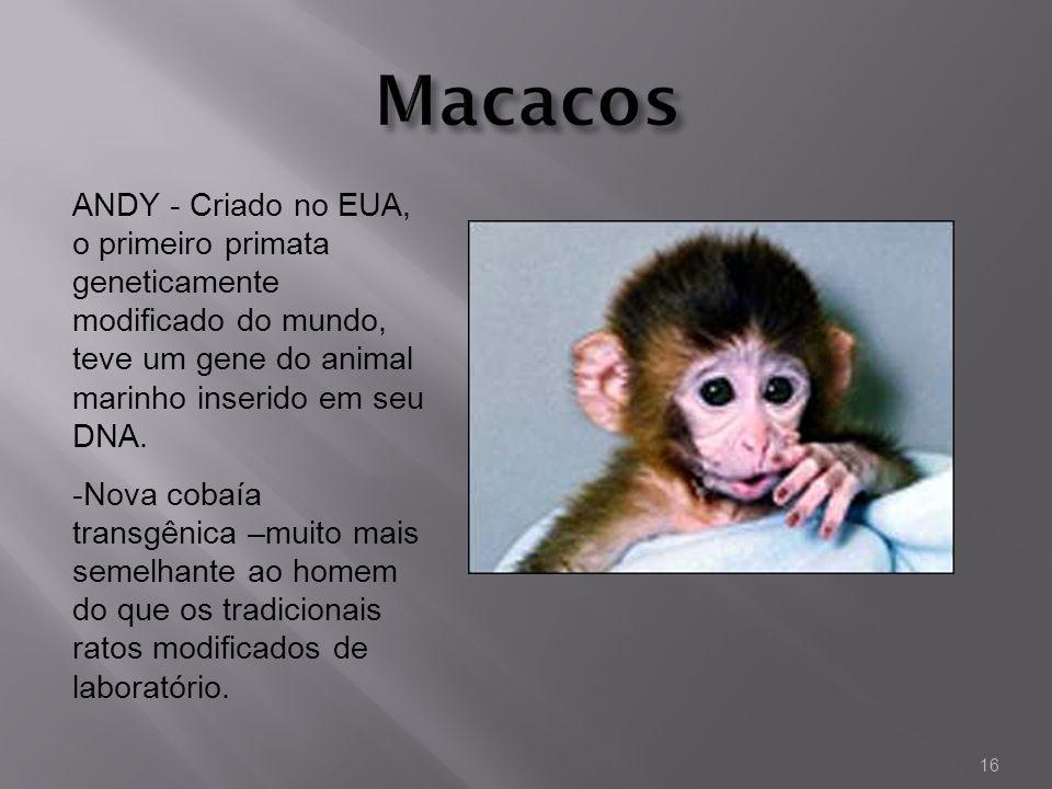 MacacosANDY - Criado no EUA, o primeiro primata geneticamente modificado do mundo, teve um gene do animal marinho inserido em seu DNA.