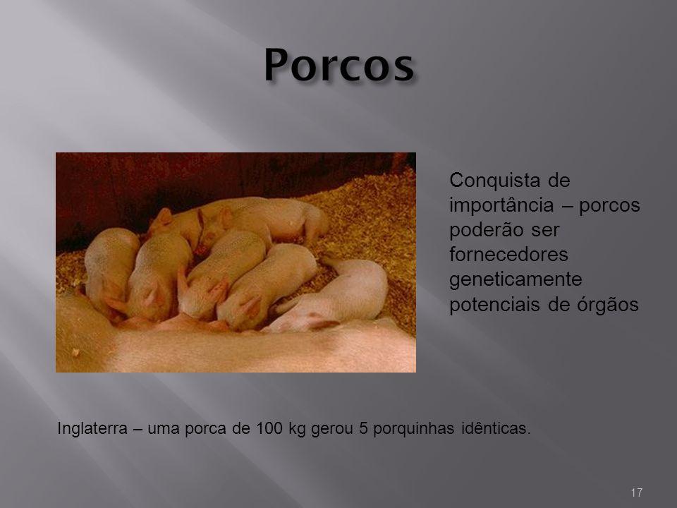 Porcos Conquista de importância – porcos poderão ser fornecedores geneticamente potenciais de órgãos.