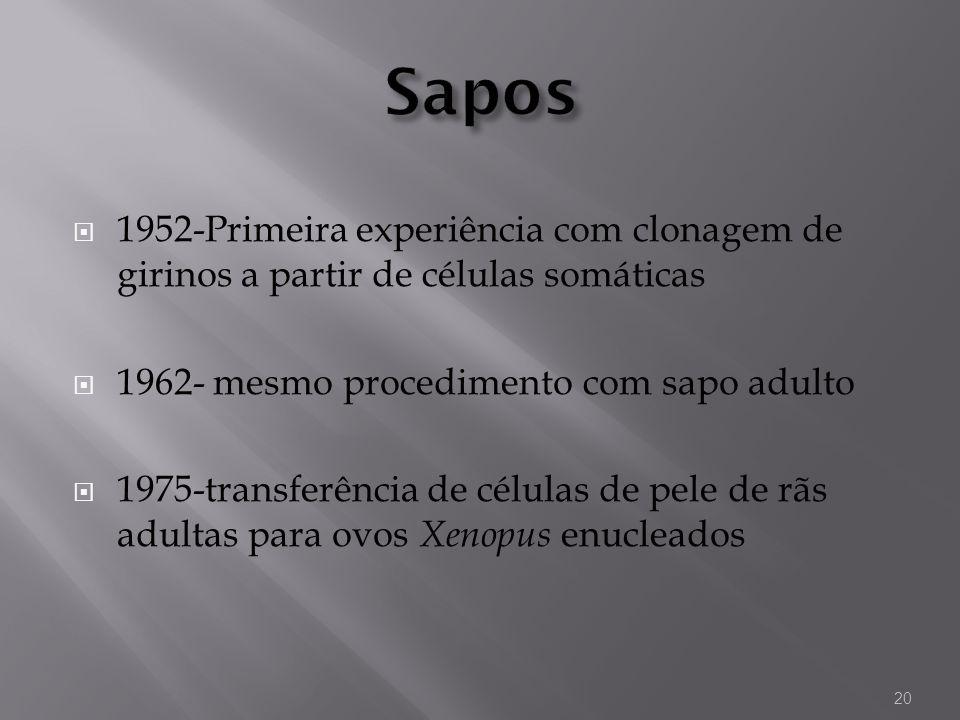Sapos 1952-Primeira experiência com clonagem de girinos a partir de células somáticas. 1962- mesmo procedimento com sapo adulto.