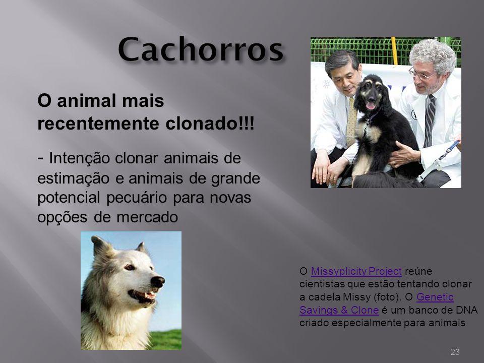 Cachorros O animal mais recentemente clonado!!!