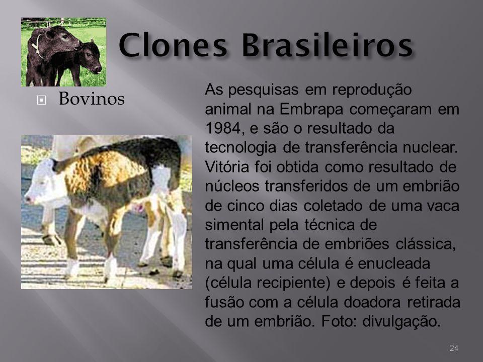 Clones Brasileiros Bovinos