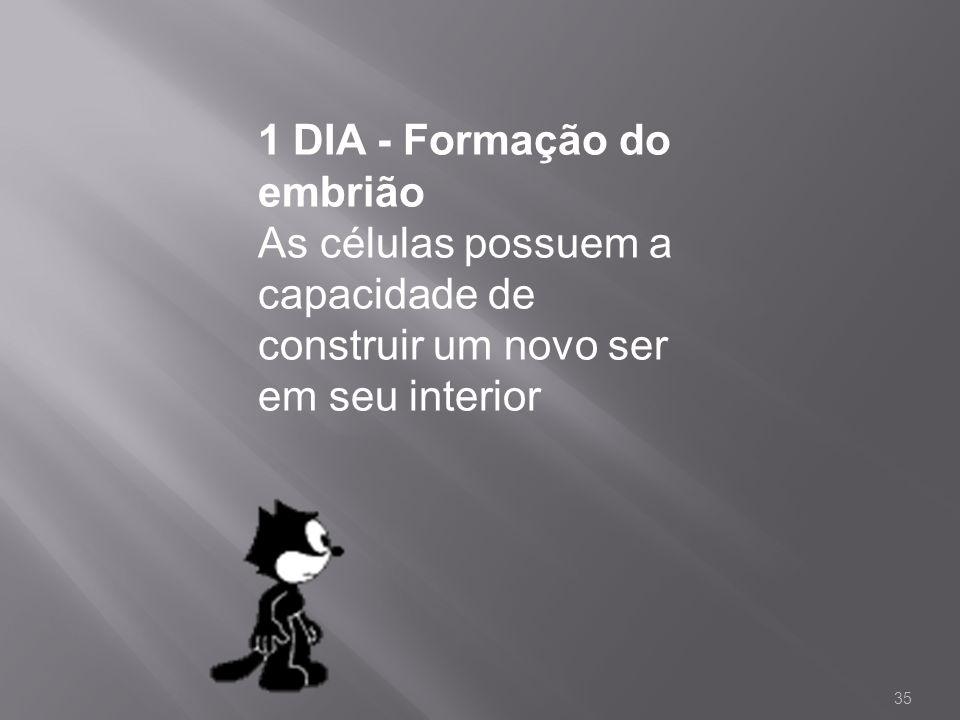1 DIA - Formação do embrião