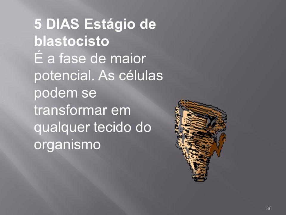 5 DIAS Estágio de blastocisto