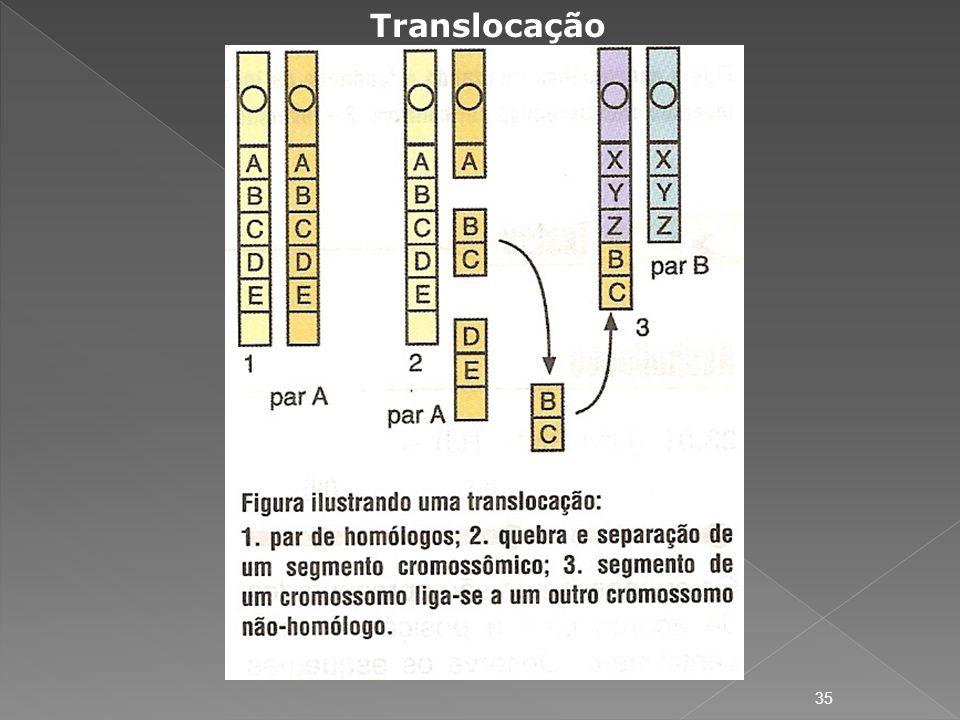 Translocação