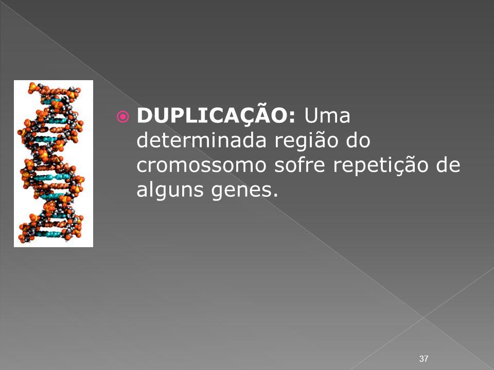DUPLICAÇÃO: Uma determinada região do cromossomo sofre repetição de alguns genes.