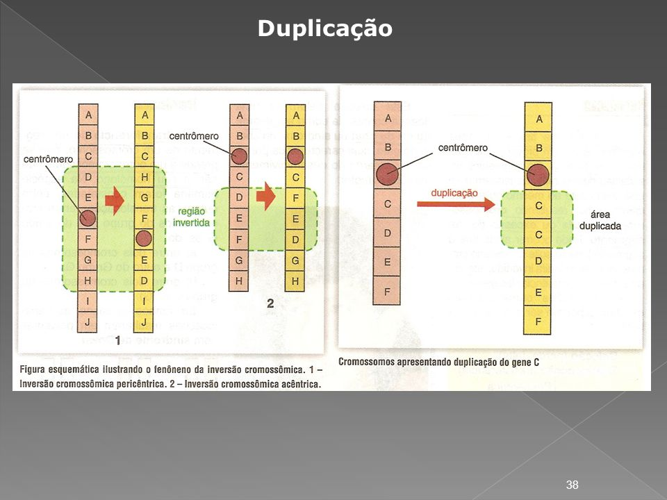Duplicação
