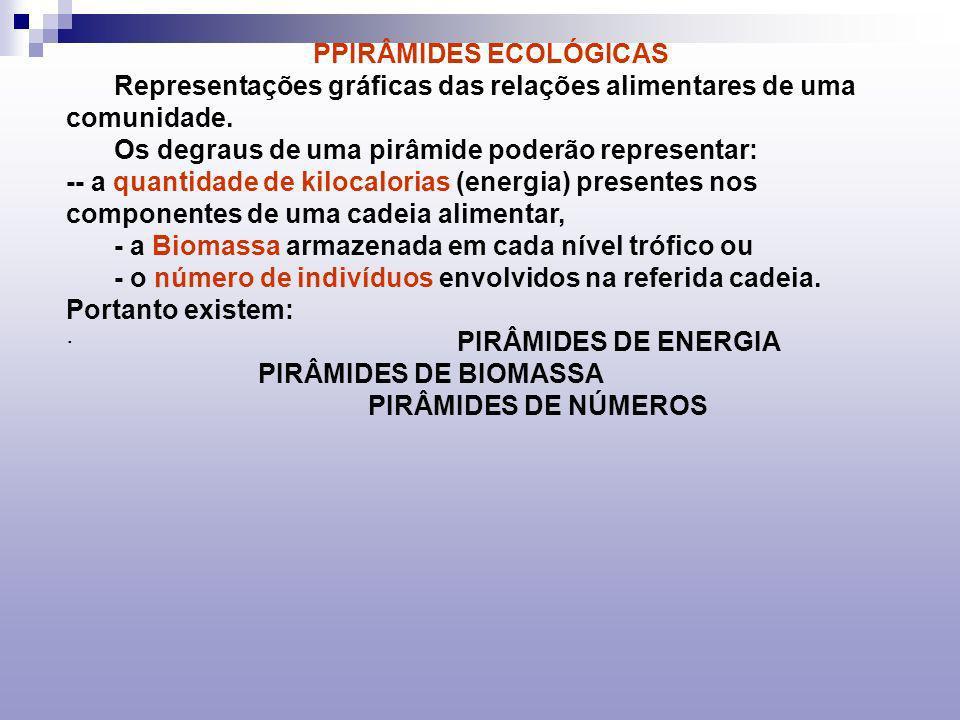 PPIRÂMIDES ECOLÓGICAS