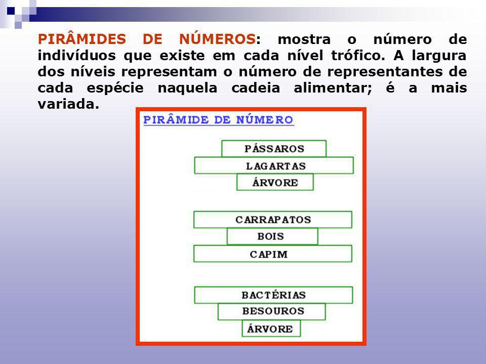 PIRÂMIDES DE NÚMEROS: mostra o número de indivíduos que existe em cada nível trófico. A largura dos níveis representam o número de representantes de cada espécie naquela cadeia alimentar; é a mais variada.