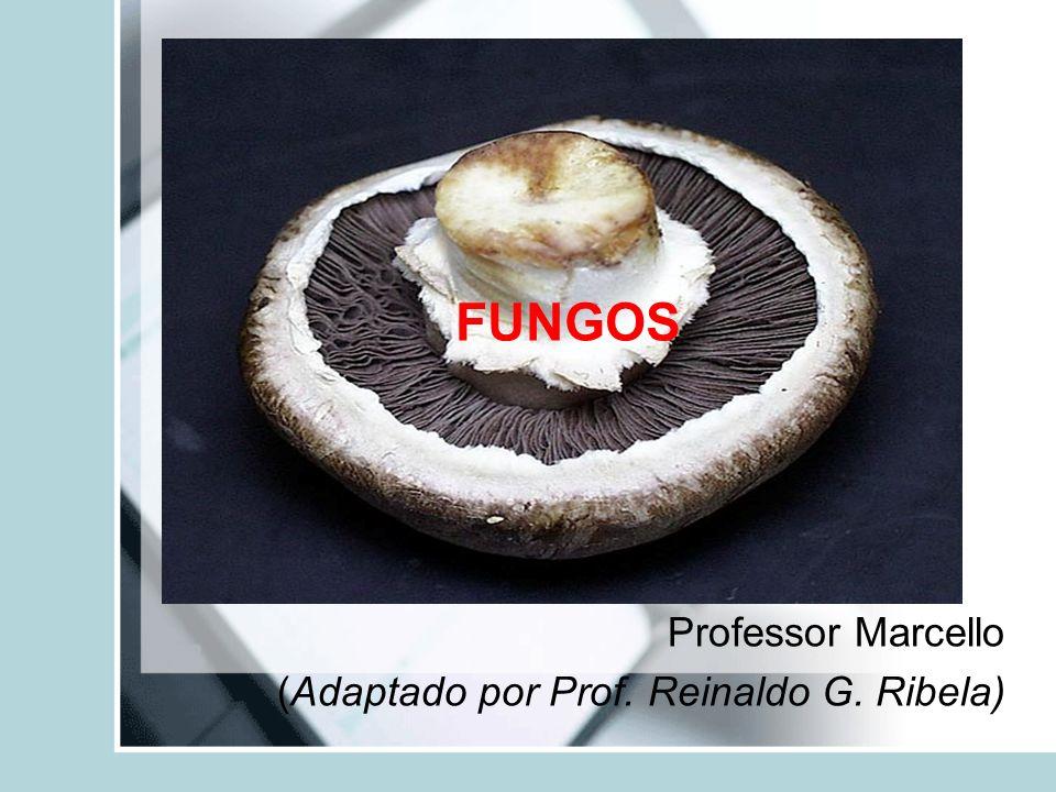 Professor Marcello (Adaptado por Prof. Reinaldo G. Ribela)