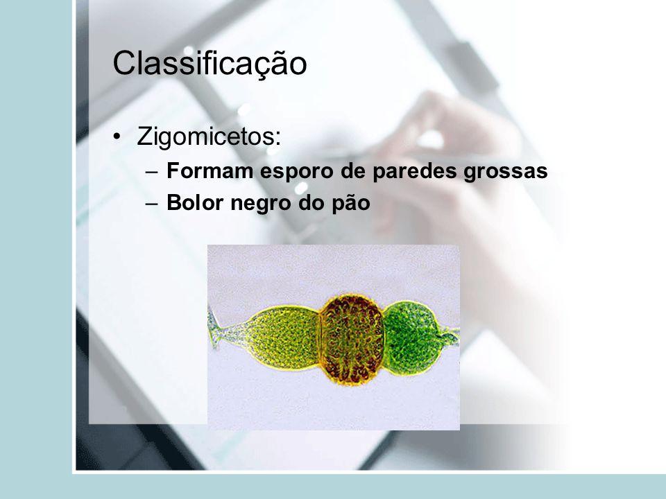 Classificação Zigomicetos: Formam esporo de paredes grossas