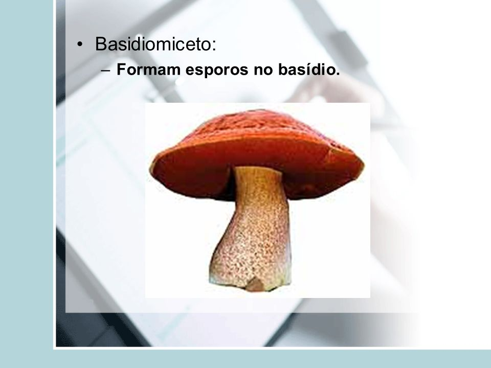 Basidiomiceto: Formam esporos no basídio.