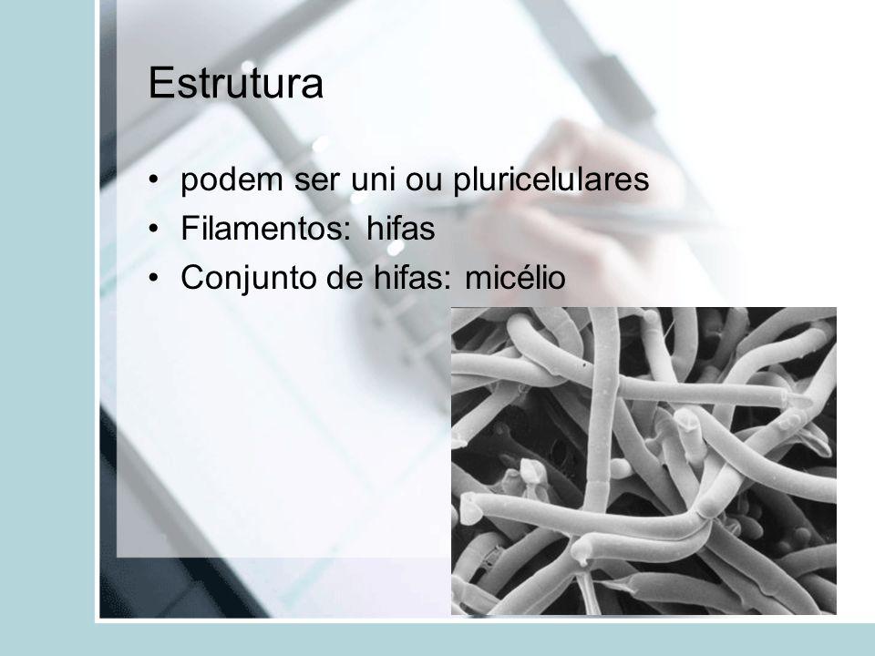 Estrutura podem ser uni ou pluricelulares Filamentos: hifas
