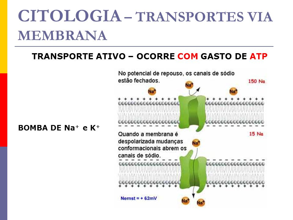 CITOLOGIA – TRANSPORTES VIA MEMBRANA