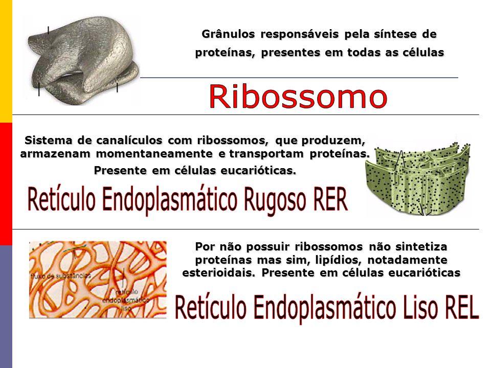 Retículo Endoplasmático Rugoso RER