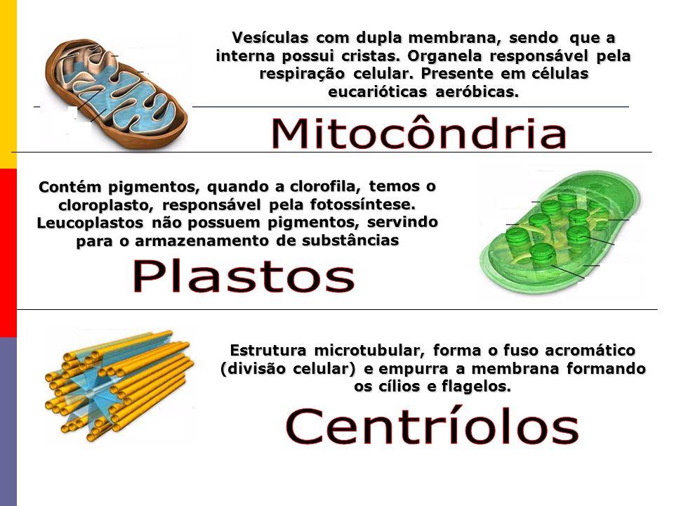Mitocôndria Plastos Centríolos