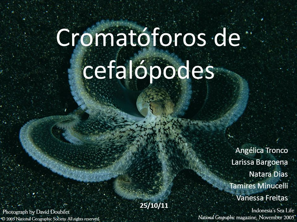 Cromatóforos de cefalópodes