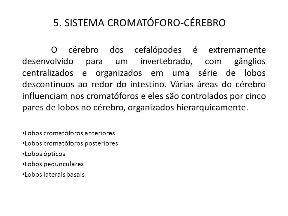 5. SISTEMA CROMATÓFORO-CÉREBRO
