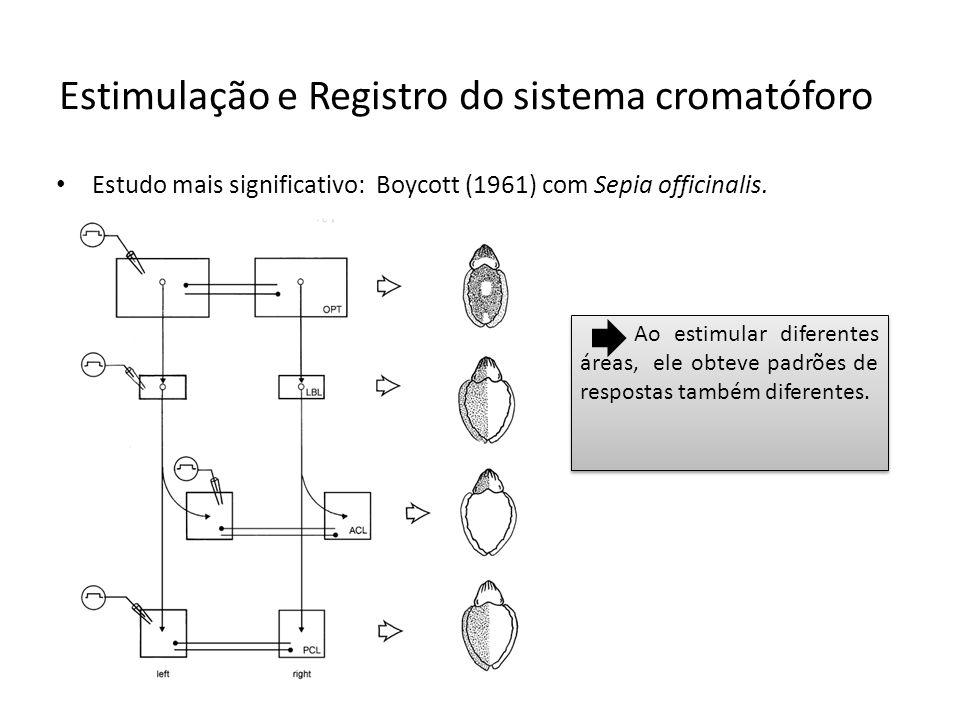 Estimulação e Registro do sistema cromatóforo