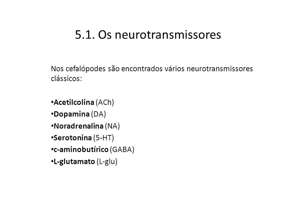 5.1. Os neurotransmissores