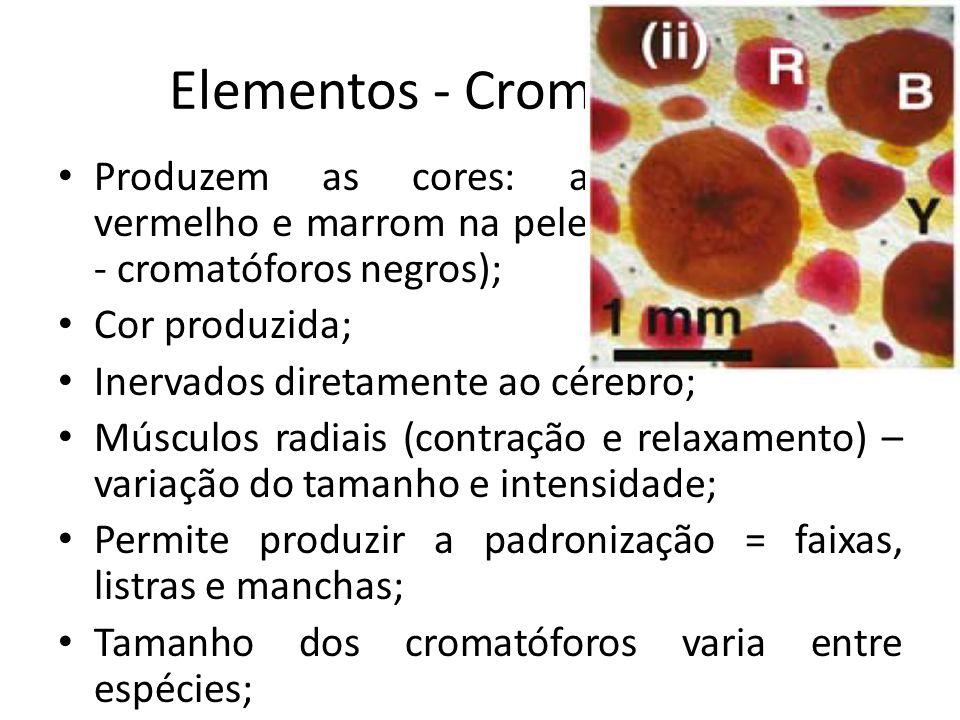 Elementos - Cromatóforos