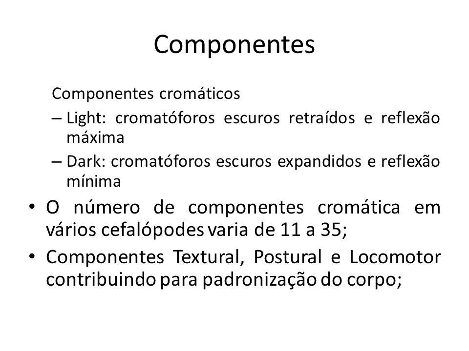 Componentes Componentes cromáticos. Light: cromatóforos escuros retraídos e reflexão máxima.