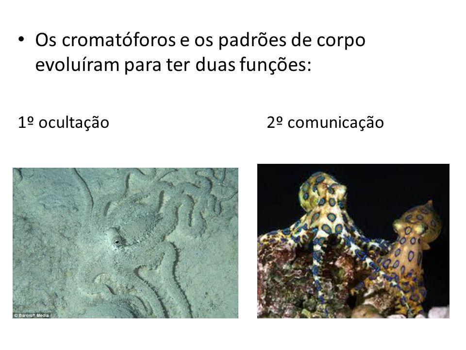 Os cromatóforos e os padrões de corpo evoluíram para ter duas funções: