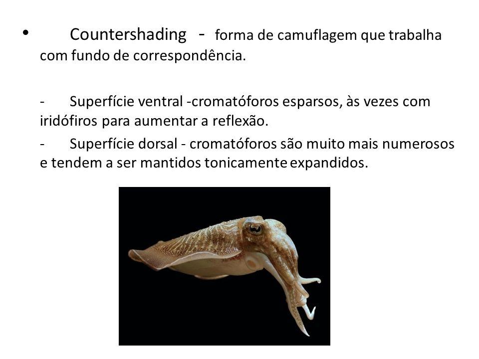 Countershading - forma de camuflagem que trabalha com fundo de correspondência.