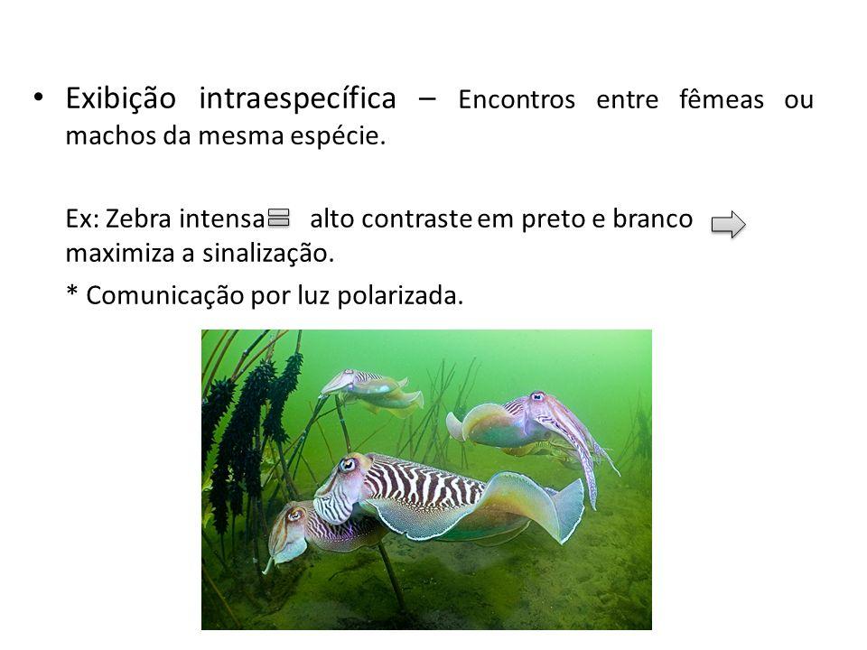 Exibição intraespecífica – Encontros entre fêmeas ou machos da mesma espécie.