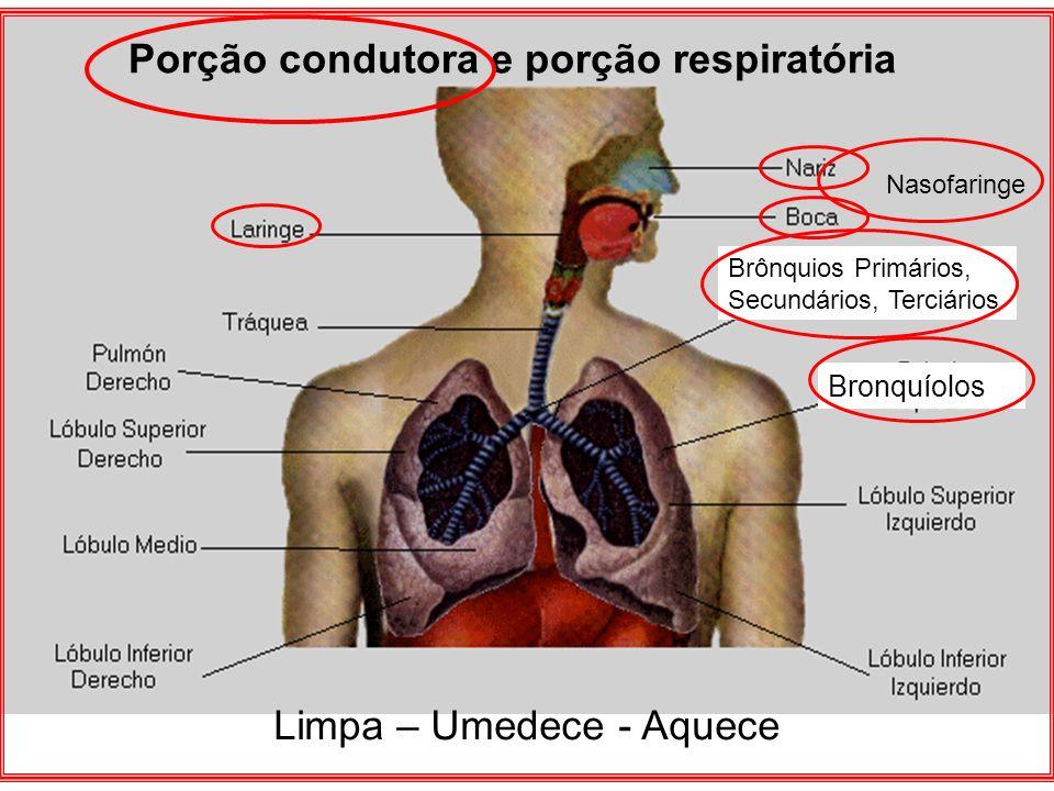 Porção condutora e porção respiratória