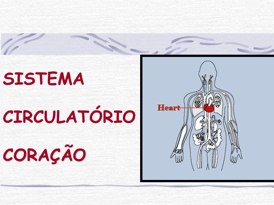 SISTEMA CIRCULATÓRIO CORAÇÃO
