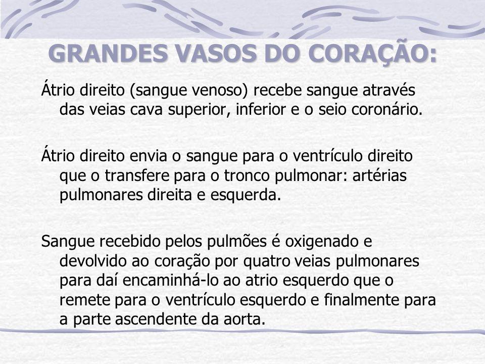 GRANDES VASOS DO CORAÇÃO: