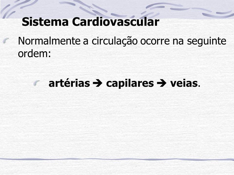 Sistema Cardiovascular