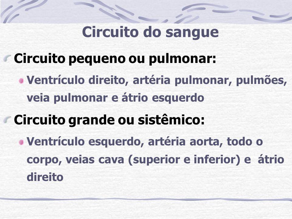 Circuito do sangue Circuito pequeno ou pulmonar: