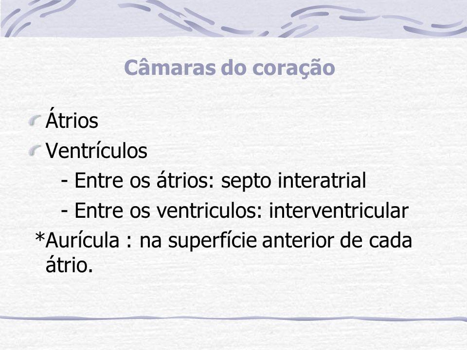 Câmaras do coração Átrios. Ventrículos. - Entre os átrios: septo interatrial. - Entre os ventriculos: interventricular.